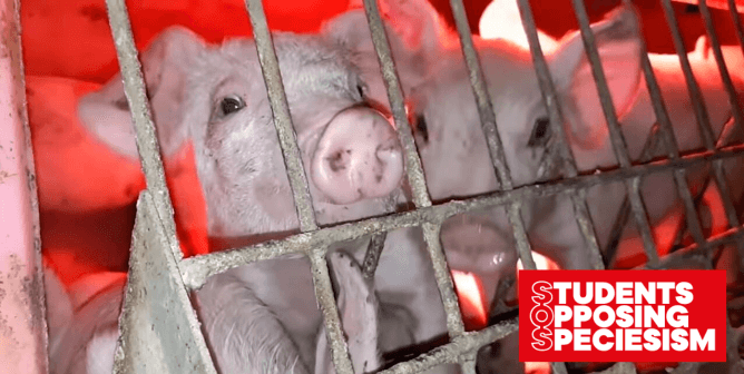 Help Students Urge the University of California to Stop the Slaughter