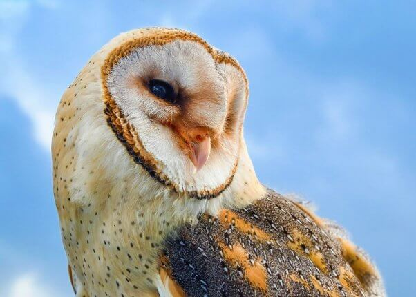 Asher Smith PETA lawsuit owls have rights