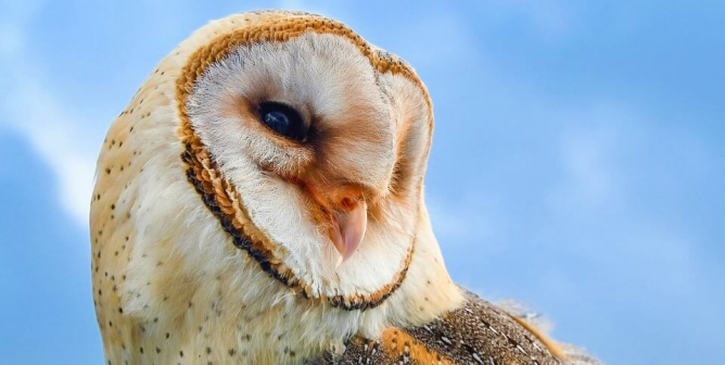 How PETA Legal Eagle Asher Smith Uses the Constitution to Protect Owls
