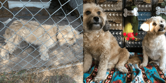 Matted Dog Does Touchdown Dance After Getting Long-Overdue Haircut
