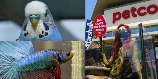 Animals Suffer at Petco