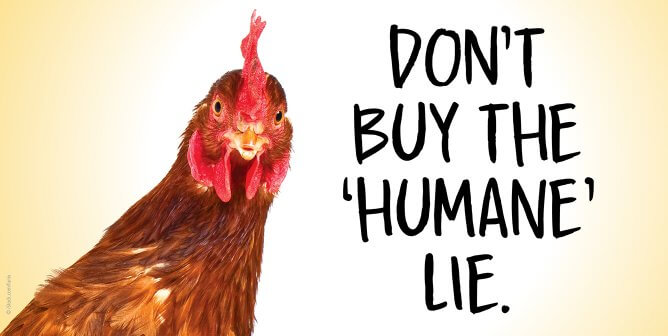 Vital Farms Claims Humane Treatment of Chickens—PETA Foundation Lawyers Help File Class Action Lawsuit