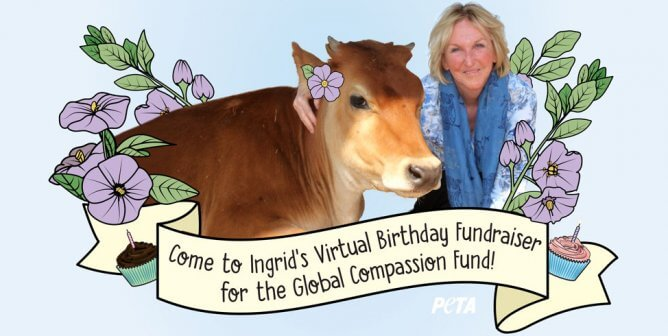 Calling All Party Animals: You're Invited to Ingrid Newkirk's Virtual Birthday Fundraiser