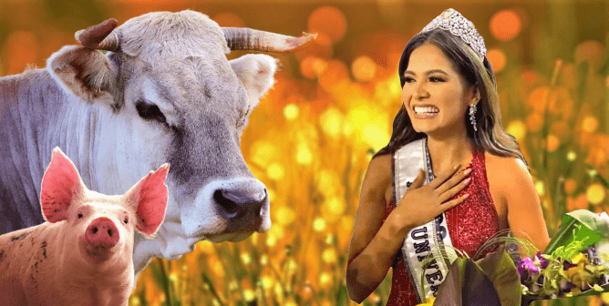 Beauty With a Vegan Purpose—Meet the 69th Miss Universe!