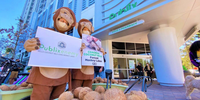 Albertsons, 'A Taste of Thai,' and Other Monkey Labor–Free Coconut Product Retailers and Brands
