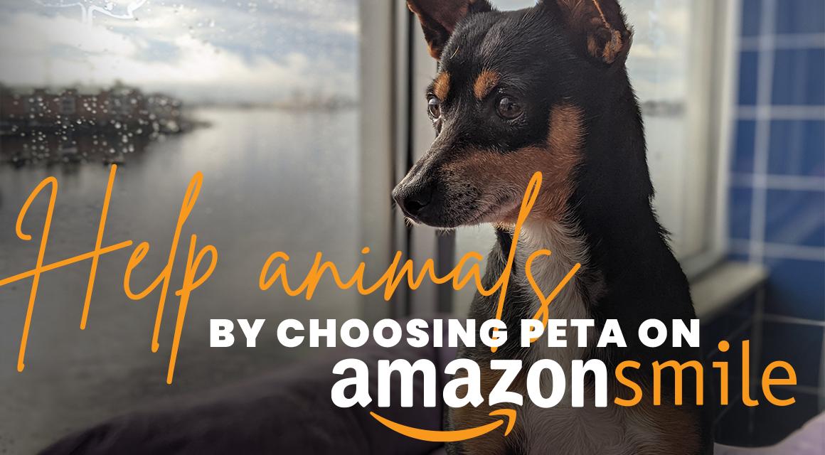 Help animals by choosing peta on amazonsmile