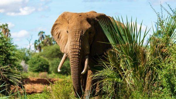 NRA Chief Shoots, Struggles to Kill Elephant—Take Action!