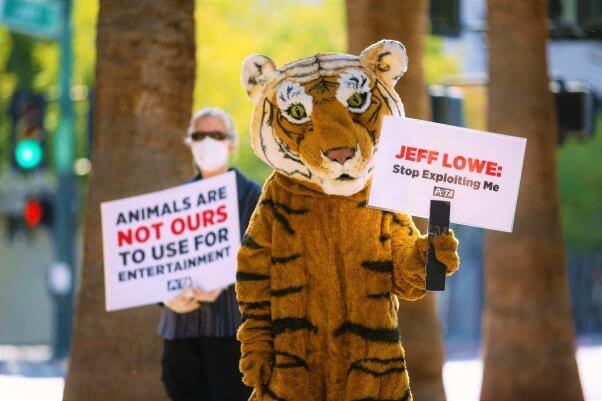 PETA Tiger protests Jeff Lowe roadside zoo