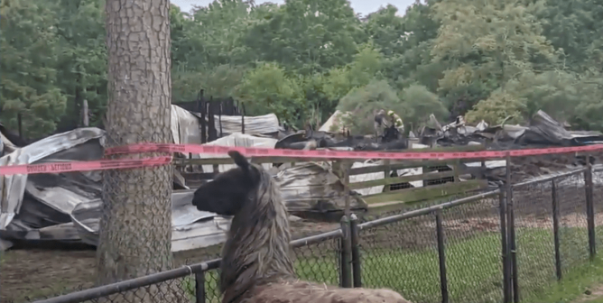 Negligence, Abuse, and … Fatal Fires? For Animals, Roadside Zoos Really Are Hell on Earth