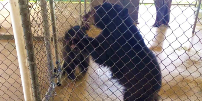 Oswald's Bear Ranch Lied About Sophie's Violent Death, PETA Says, and the Feds Are Finally Paying Attention