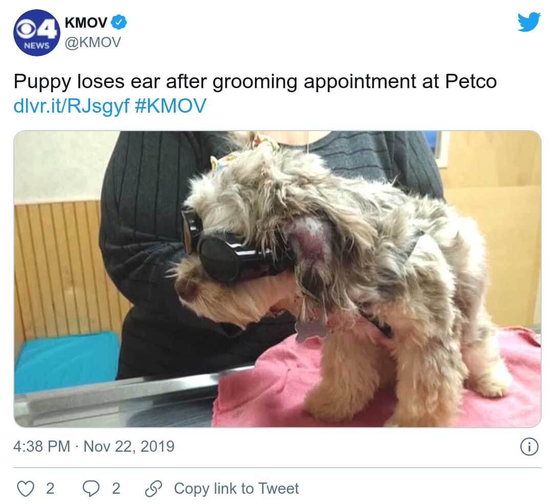 Cachorro pierde oreja en petco