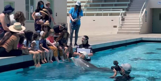 VIDEO: Robotic Dolphins? The Invention You'll Need to 'Sea' to Believe