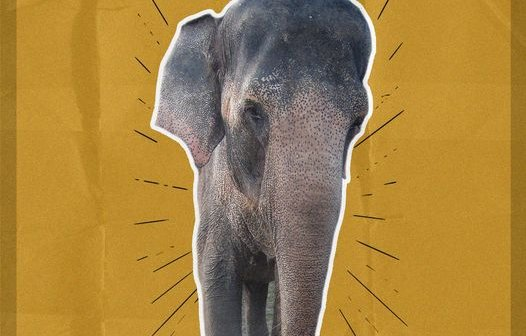 Goodbye, Tai: PETA Laments Death of Elephant Forced to Perform in Movies, TV
