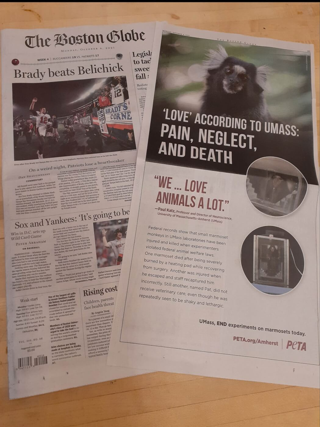 Ad in Boston Globe about marmoset experiments at UMass Amherst