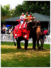 Indiana State Fair Elephant Rides