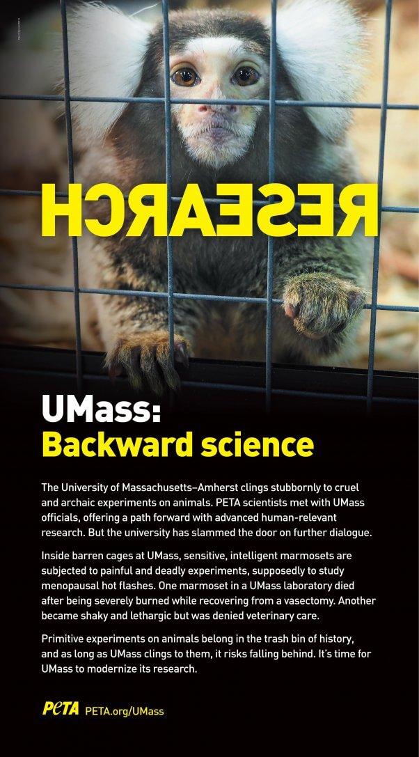UMass Backward Science Ad