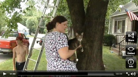 Cat brought down from tree