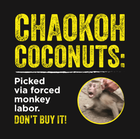 Chaokoh Coconuts Picked via Forced Monkey Labor: Don't Buy It!
