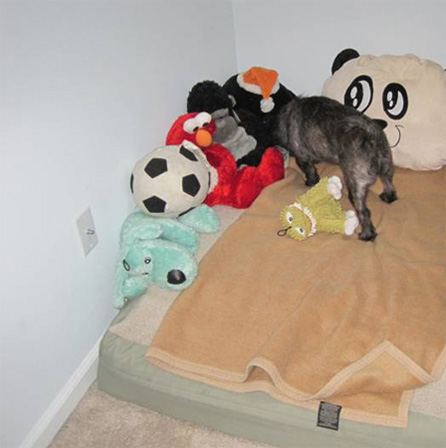 Chic and his toys