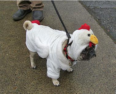 Chicken_Pug.JPG