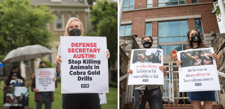 One-Two PETA Punch Takes On Marine Bloodlust Drills