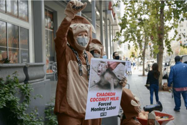 Coconut Milk Monkey Labor Protest