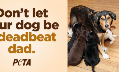 PETA's Ballsy New 'Deadbeat Dad' Ad Will Turn Heads This Father's Day