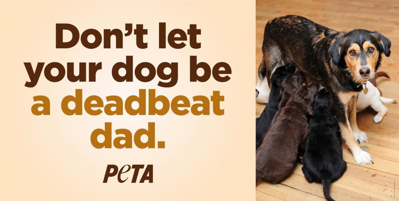 Homepage Feature image for deadbeat dad ad