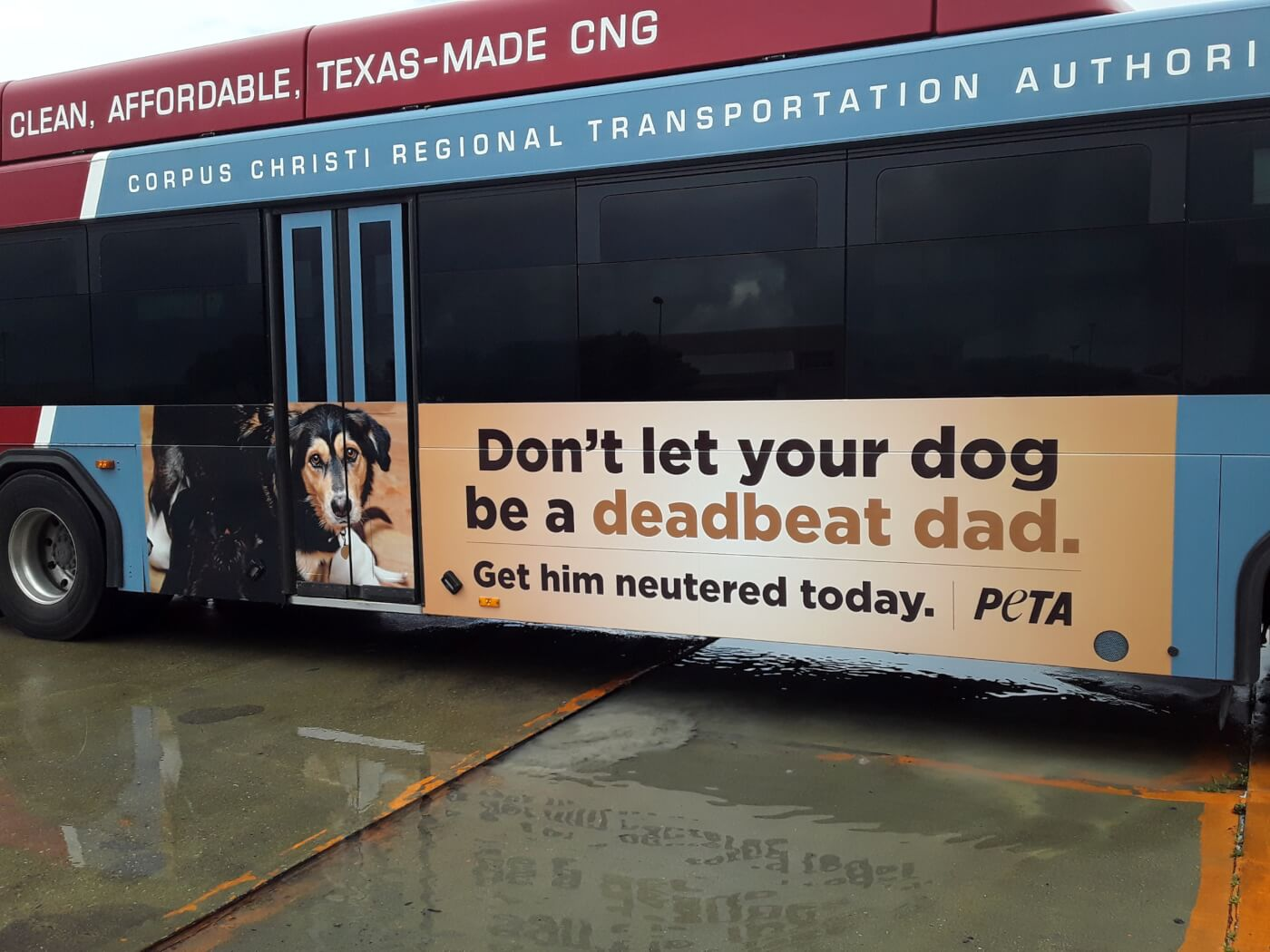 Deadbeat Dad PETA dog ads hit Corpus Christi