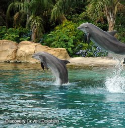 Discovery_Cove_Dolphins.jpg