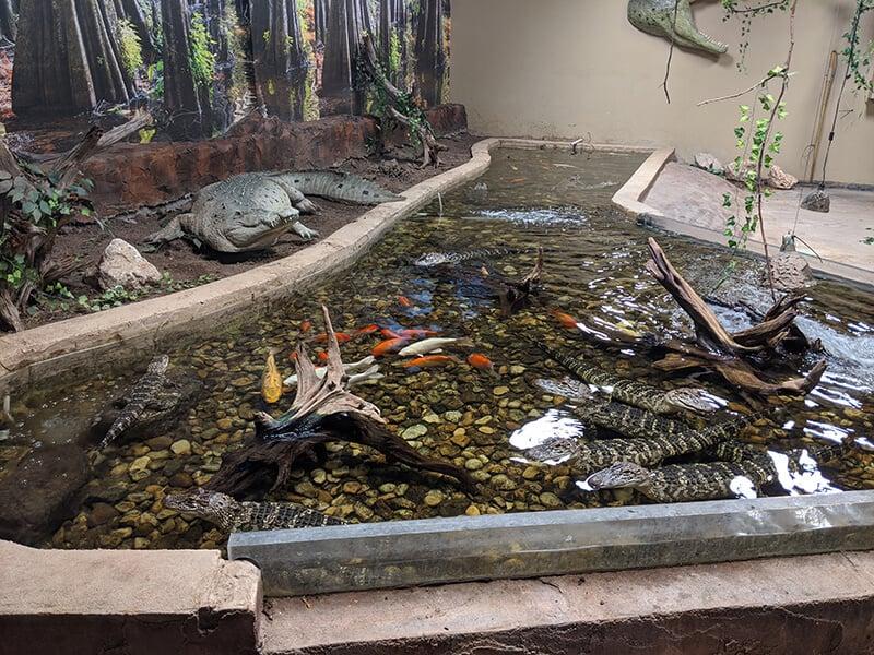 photo of alligator enclosure