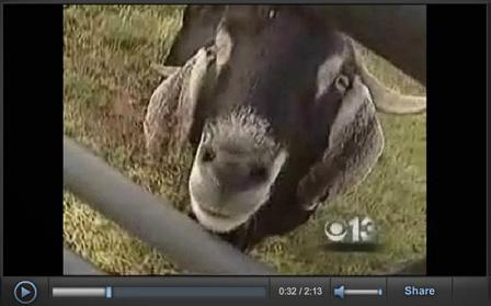 Screenshot of Newscast