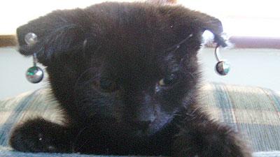 Gothic Kitten