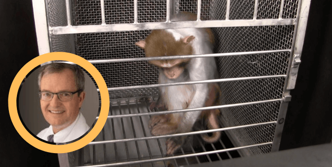Experts Agree With PETA: Government Fear Experiments on Monkeys Are Worthless!