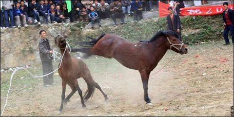Horse_fighting.jpg