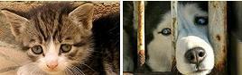 I_Buy_Strays_cat_dog.JPG