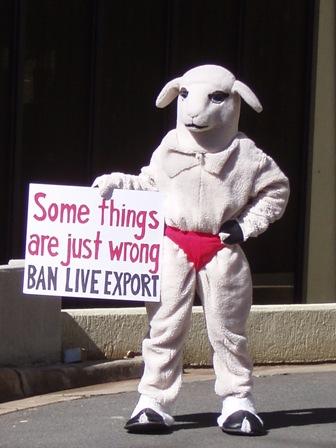 Lucy the Sheep PETA Files.jpg