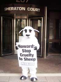 Lucy_the_Sheep.jpg