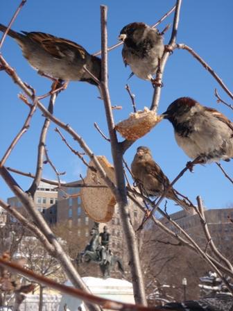 Feeding the birds bread
