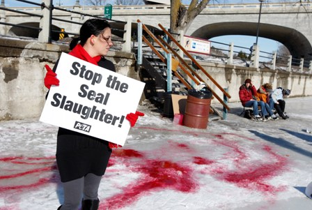 Canadian seal slaughter demo