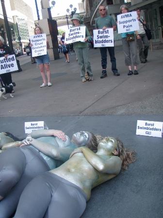 AVMA demonstration