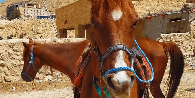 Progress! New Electric Carts Will Lighten the Load for Horses at Petra