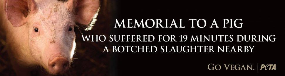 Memorial To A Pig