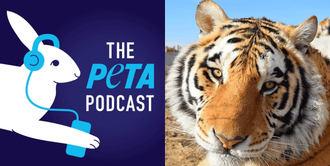Go Behind the Scenes at PETA With Our New Podcast
