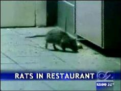 Rats in KFC.jpg