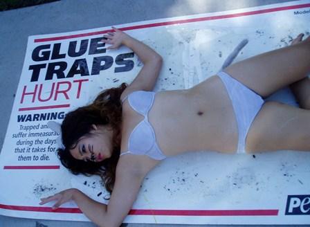 San Diego glue trap demo.JPG