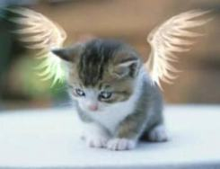 Soul_Kitty.jpg