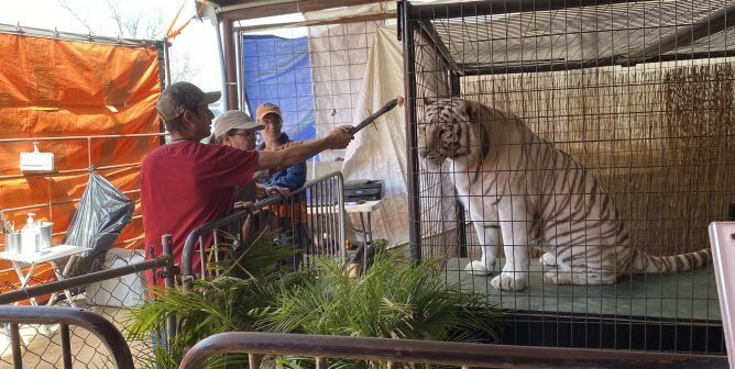 Feds Come for Shoddy Tiger Exploiter After PETA Tips Them Off