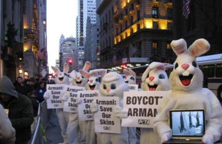 armani_bunnies1.JPG