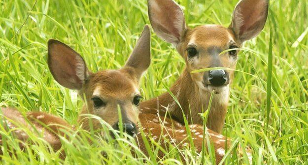 Urge Township in New Jersey to Scrap Cruel Deer-Killing Plans!